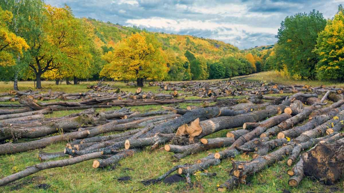 Лісозаготівля, заготовка дров